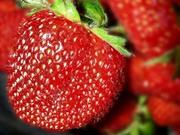 Клубника 60 сортов,  виноград 100 сортов,  розы,  саженцы плодовые и др.