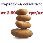 Продам картофель посадочный семенной сортовой
