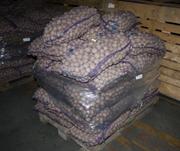 Продам картофель семенной посадочный оптом