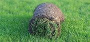 Рулонный газон,  укладка,  уход за газоном