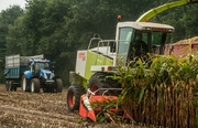 Услуги по уборке кукурузы на силос,  аренда силосного комбайна,  силос