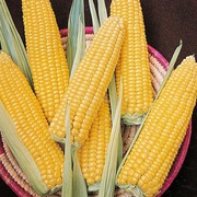 Кукурудза продати. Кукурудза куплю