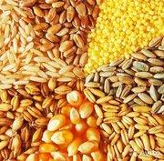 Закупаем зерновые в Украине