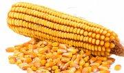 Закупаем зерновые по всем регионам Украины