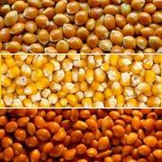 Закупаем зерновые по всей территории Украины