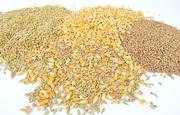 Зерновідходи зернові,  олійні,  бобові куплю