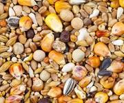 Зерновідходи бобові,  олійні,  зернові куплю